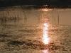 lo stagno sacro dei pescigatto