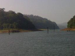 alberi nel lago